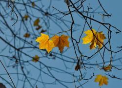 November in Maine